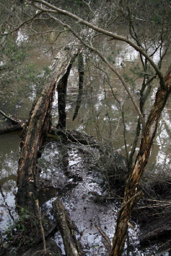 balcombe-creek