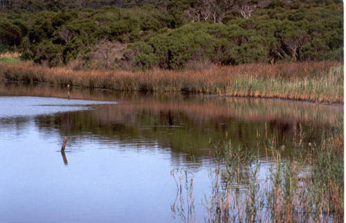 estuary-davidb-2004