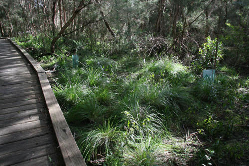 plantings-beside-the-boardwalk-kirsner