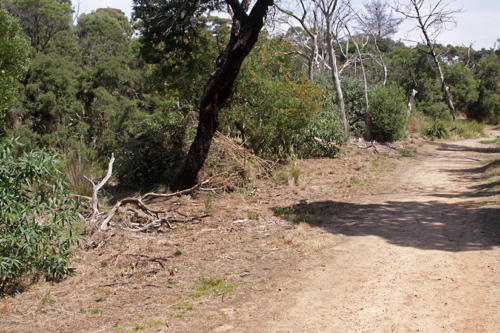 track-along-north-bank-kirsner