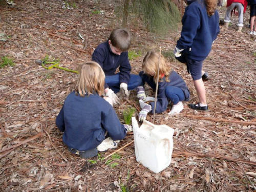 mt-martha-primary-school-students-planting-2008