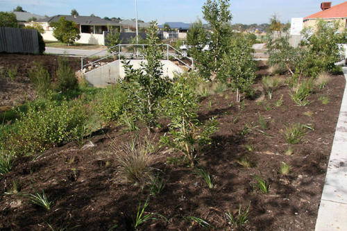 berg plantings along harrap creek 2010-kirsner