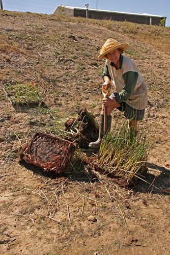 century-drive-liz-planting-wetland-plants-in-retarding-basin-2009-kirsner