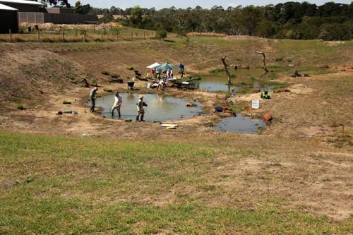 century-drive-planting-wetland-plants-in-retarding-basin-2009-kirsner