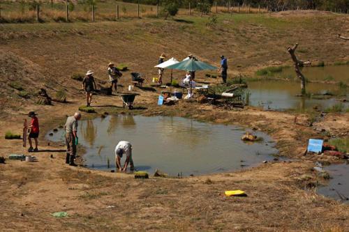 century-drive-planting-wetland-plants-in-retarding-basin2-2009-kirsner
