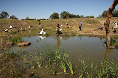 century-drive-planting-wetland-plants-in-retarding-basin4-2009-kirsner