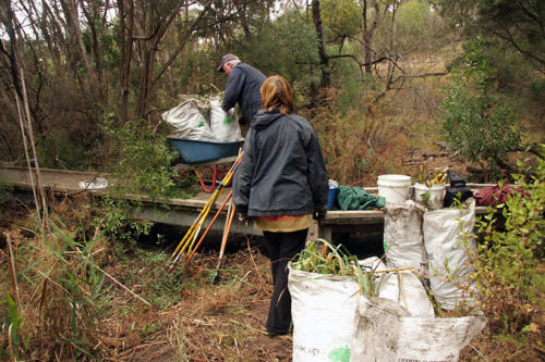 bagging-and-carting-out-the-weeds-kirsner