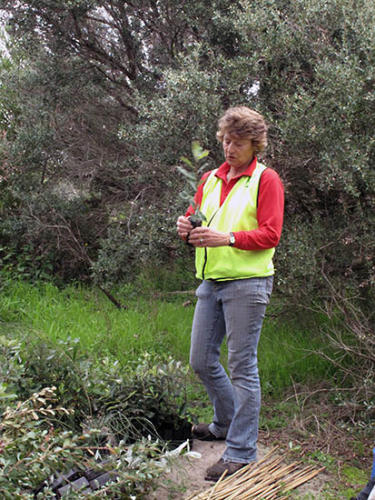 banksia-planting-on-the-foreshore-liz-gives-instructions-kirsner